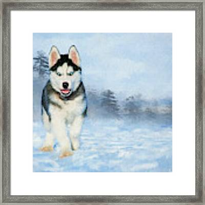 Husky Pup In The Snow - Painting Framed Print by Ericamaxine Price