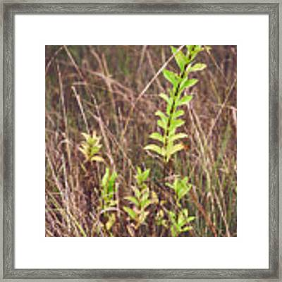 In Tall Grass Framed Print by Whitney Goodey