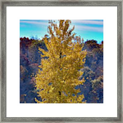 Jogger On Trail In Fall Framed Print by Dan Friend