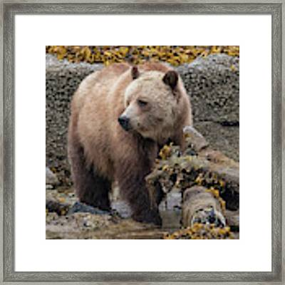 Keeping Watch Framed Print by Randy Hall