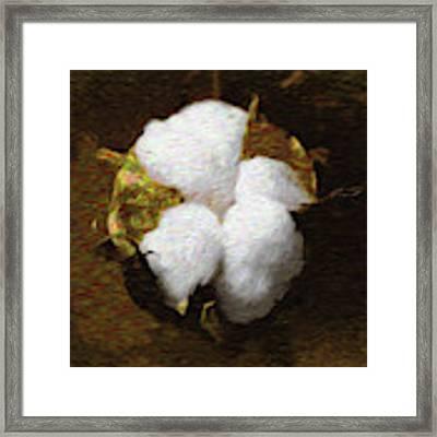 King Cotton Framed Print by Barry Jones