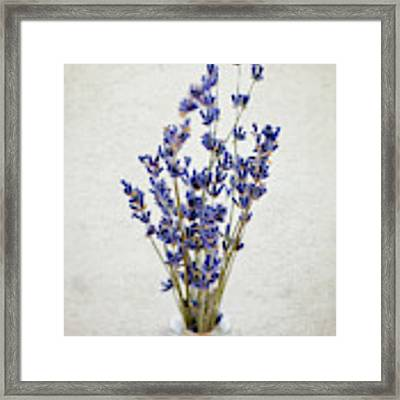 Lavender Framed Print by Nicole Young