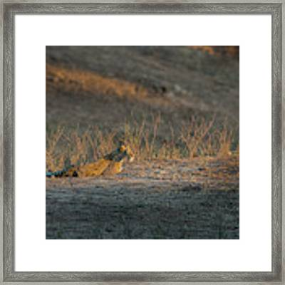 Lc12 Framed Print by Joshua Able's Wildlife