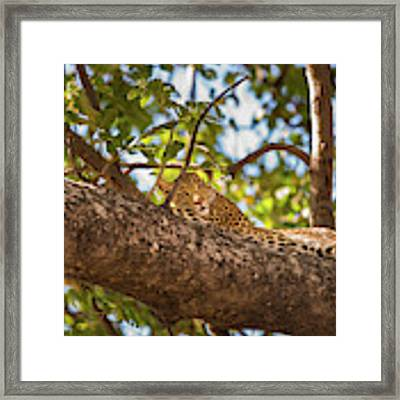 Lc13 Framed Print by Joshua Able's Wildlife