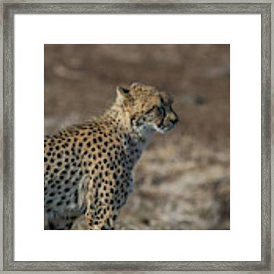 LC5 Framed Print by Joshua Able's Wildlife