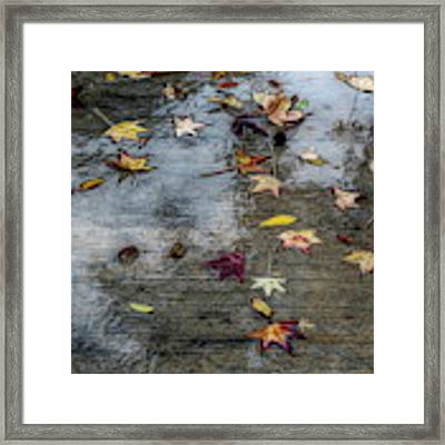 Leaves In The Rain Framed Print by Alison Frank