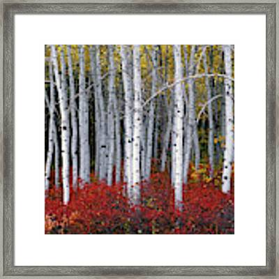 Light In Forest Framed Print by Leland D Howard