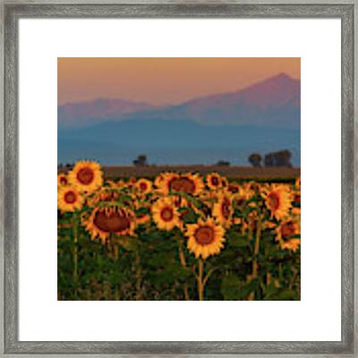 Light Of The Sunflowers Framed Print by John De Bord