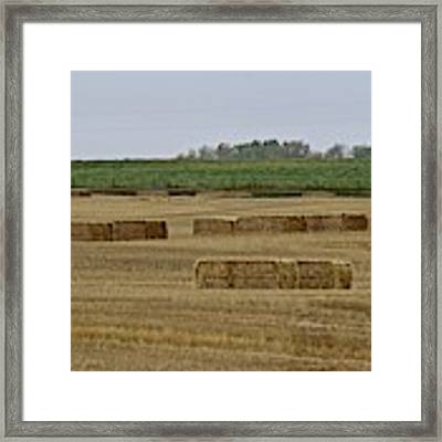 Lined Up Framed Print by Ann E Robson
