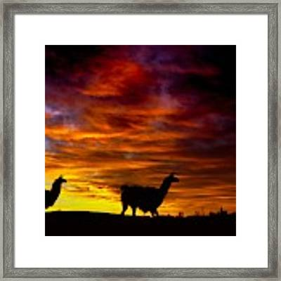 Llama Silhouette  Framed Print by Bryan Smith