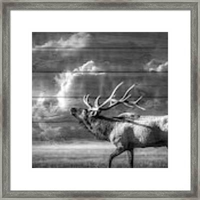 Majestic Elk In Black And White Framed Print by Debra and Dave Vanderlaan