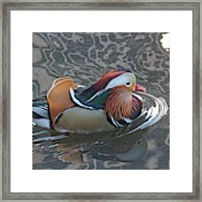 Mandarian_18_faa Framed Print by Patricia Youngquist