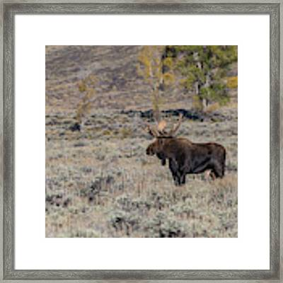 ME7 Framed Print by Joshua Able's Wildlife