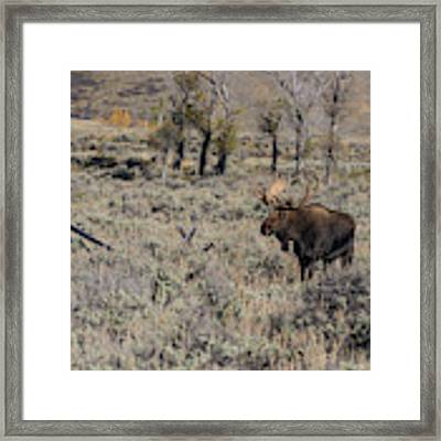 ME9 Framed Print by Joshua Able's Wildlife