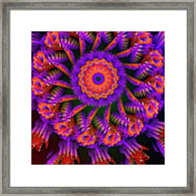 Medicina Framed Print by Skip Hunt