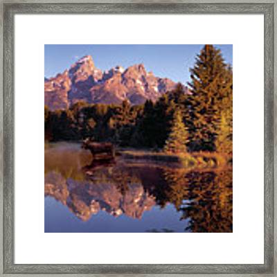 Moose Tetons Framed Print by Leland D Howard