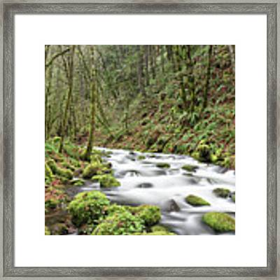 Mossy Stream Framed Print by Nicole Young