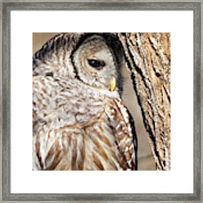 Nap Time Framed Print by Randy Hall
