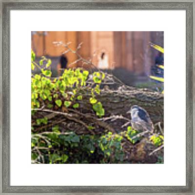 Night Heron At The Palace Framed Print by Kate Brown