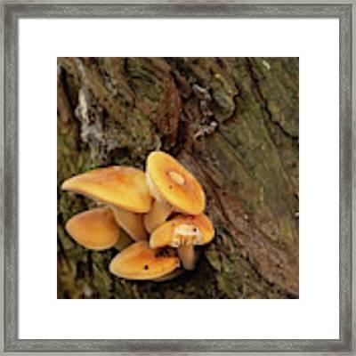 Orange Funghi Framed Print by Scott Lyons