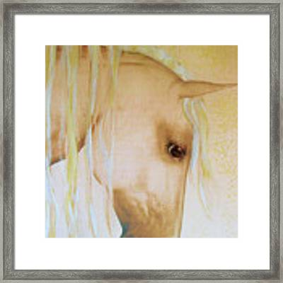 Palomino Head Study Framed Print by Valerie Anne Kelly