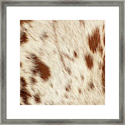 Pattern Of A Longhorn Bull Cowhide. Framed Print by Rob D Imagery