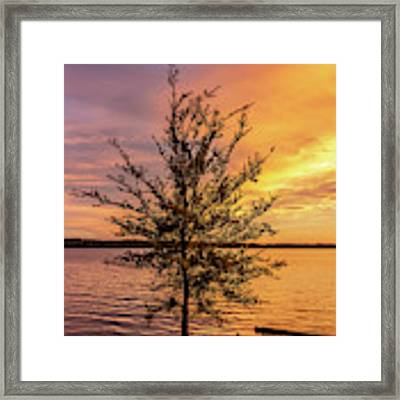 Percy Priest Lake Sunset Young Tree Framed Print by D K Wall