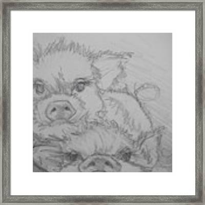 Photo Bomber Sketch Framed Print by Jani Freimann