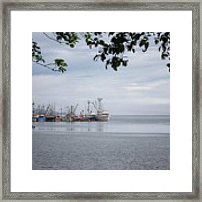 Port Hardy Marina Framed Print by Randy Hall