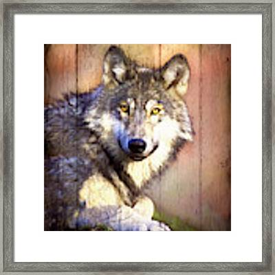 Portrait Of A Wolf Painting Framed Print by Debra and Dave Vanderlaan