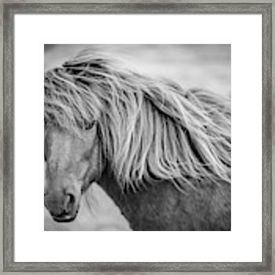 Portrait Of Icelandic Horse In Black And White Framed Print by Gigi Ebert