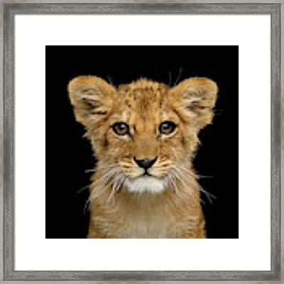 Portrait Of Little Lion Framed Print by Sergey Taran