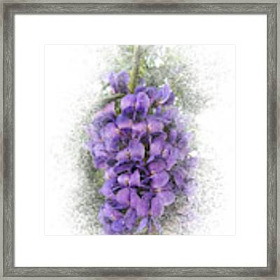 Purple Texas Mountain Laurel Flower Cluster Framed Print by Patti Deters