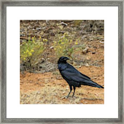 Raven, Grand Canyon Framed Print by Dawn Richards