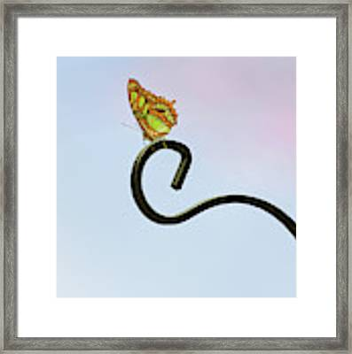 Sacred Framed Print by Michelle Wermuth