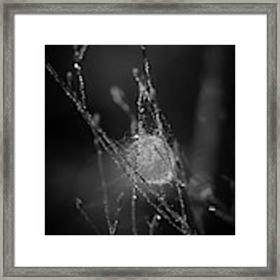 Sacrificial Framed Print by Michelle Wermuth