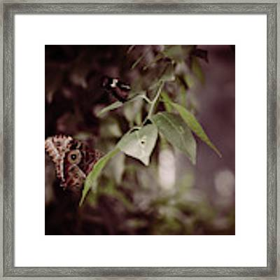 Safety Framed Print by Michelle Wermuth