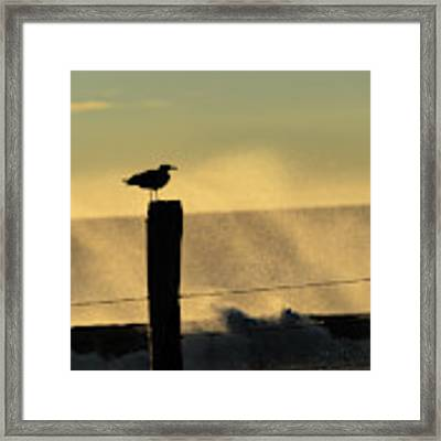 Seagull Silhouette On A Piling Framed Print by William Dickman