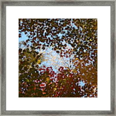 Shadow Canopy Framed Print by Dylan Punke