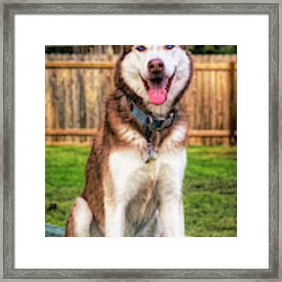 Siberian Husky Digital Art A030819 Framed Print by Mas Art Studio