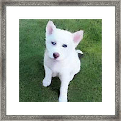 Siberian Husky Puppy A030619 Framed Print by Mas Art Studio