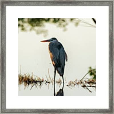 Early Morning Hunter Framed Print by Dan Friend