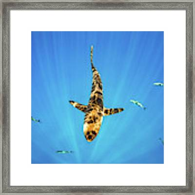 Silky Shark Framed Print by Nicole Young
