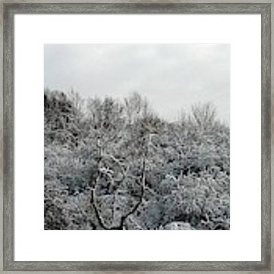 Snow Covered Trees Framed Print by Rose Santuci-Sofranko