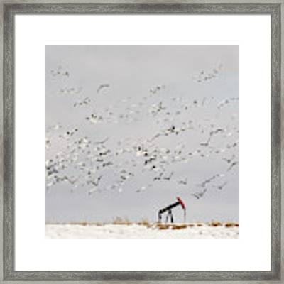 Snow Geese Over Oil Pump 01 Framed Print by Rob Graham