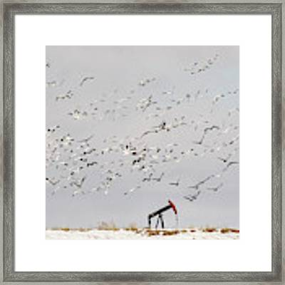 Snow Geese Over Oil Pump 02 Framed Print by Rob Graham