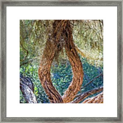 Strange Tree Framed Print by Kate Brown