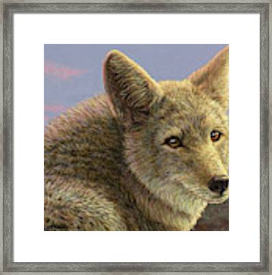 Study Of A Coyote Framed Print by James W Johnson
