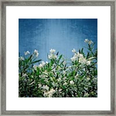 Summer Wildflowers Framed Print by Carolyn Marshall