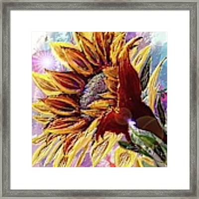 Sunflower In The Sun Framed Print by Darren Cannell